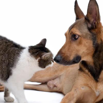 Adult Wellness Visits - Marshfield Veterinary Service - Marshfield, WI